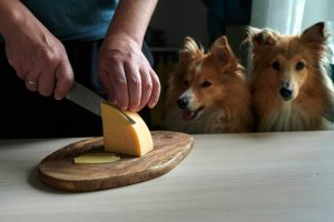 Can Dogs Eat Cheese?