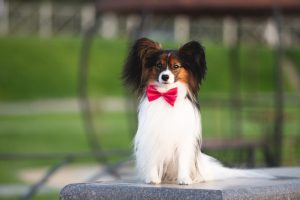 Easiest to Train Dog Breeds