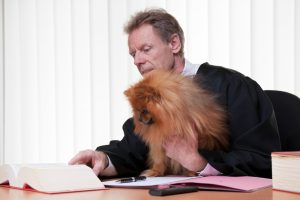 Court Cases Involving Celebrity Pets