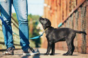 How Long Should I Walk My Puppy?