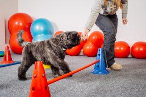 Internet Dog Trainers