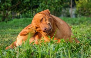 Best Diet for Itchy Dogs