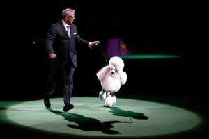 Best Dogs from the Westminster Dog Show