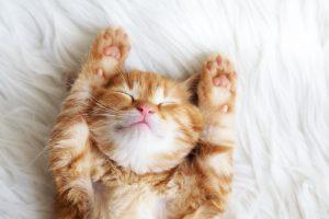 Cat's Sleeping Position