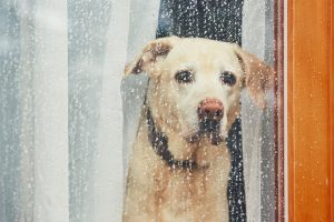 Do Dogs Mourn Their Owners?