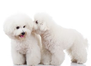 Do Dogs Recognise Their Own Breed?
