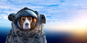 Can Dogs Travel in Space?